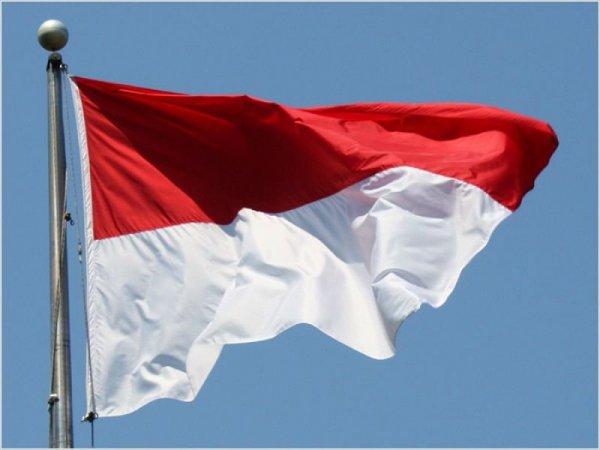 теперь, доступны, Индонезийском, языке, сайта, Материалы, Ellaos, отличные, новости, проекте